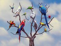 Gambar gambar Macam macam burung BEO