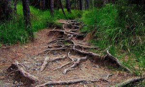 Root dalam Bahasa Indonesia